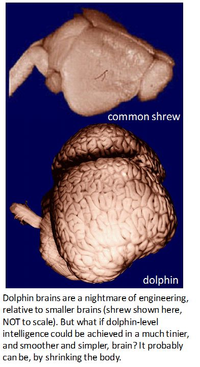 dolphin brain size  versus shrew brain
