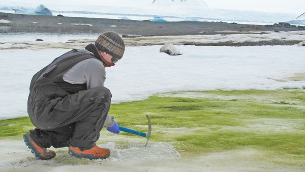 Green Snow: In A Warmer World, Algae Could Spread Across The Antarctic