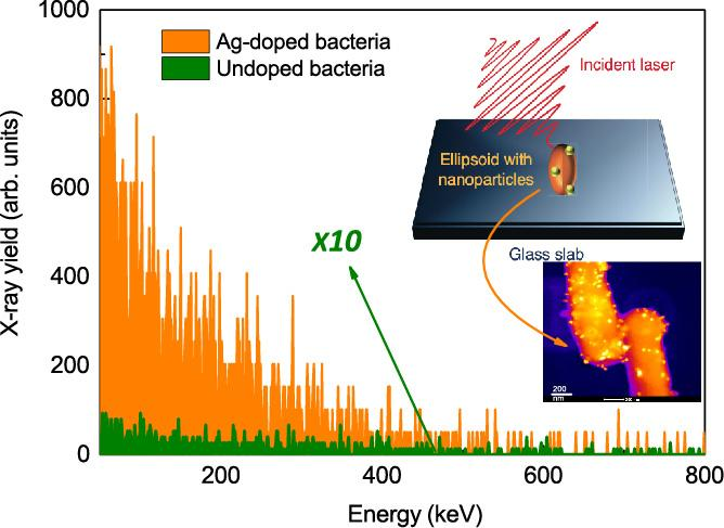 Nanospiked Bacteria Are The Brightest Hard X-Ray Emitters
