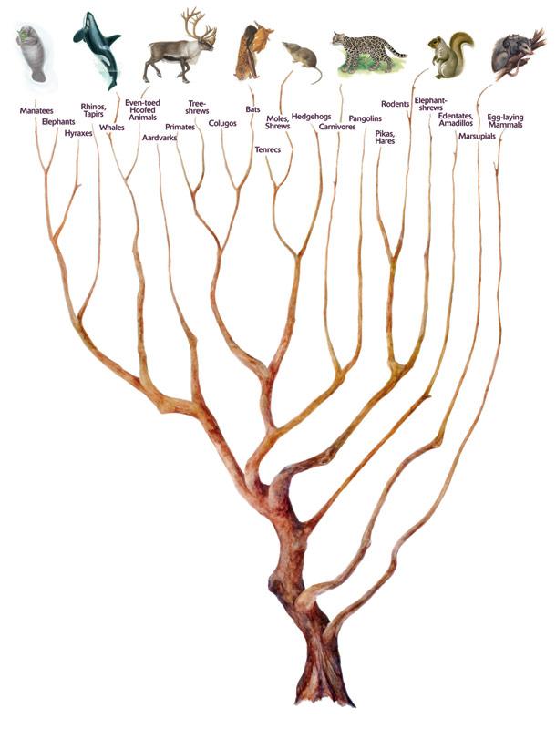 Improving Understanding Of Mammal Evolution | Science 2.0  Improving Under...