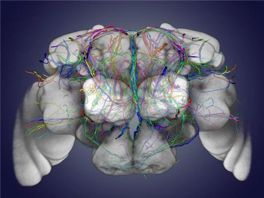 Brain Cartography