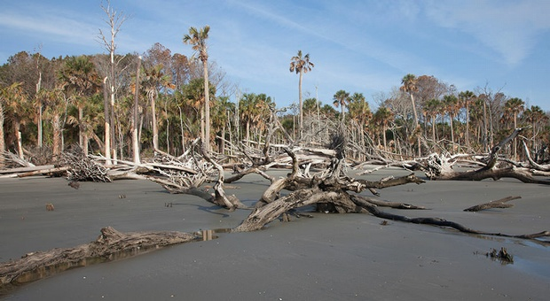 Tree Farts And Ghost Forests A New Target For Climate Change