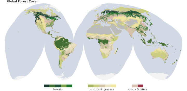 Global forest cover