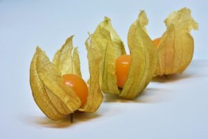 Groundcherries Are Just The Start: CRISPR May Popularize A Food Future You Haven't Heard Of Yet