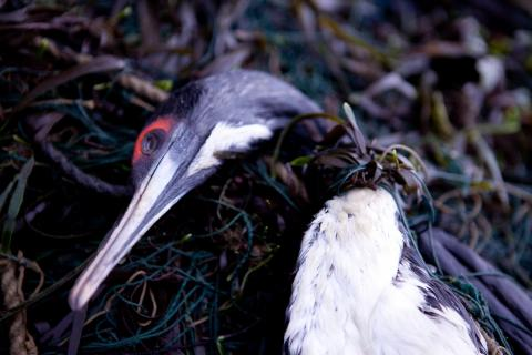 How To Reduce Seabirds In Fishing Nets - LEDs