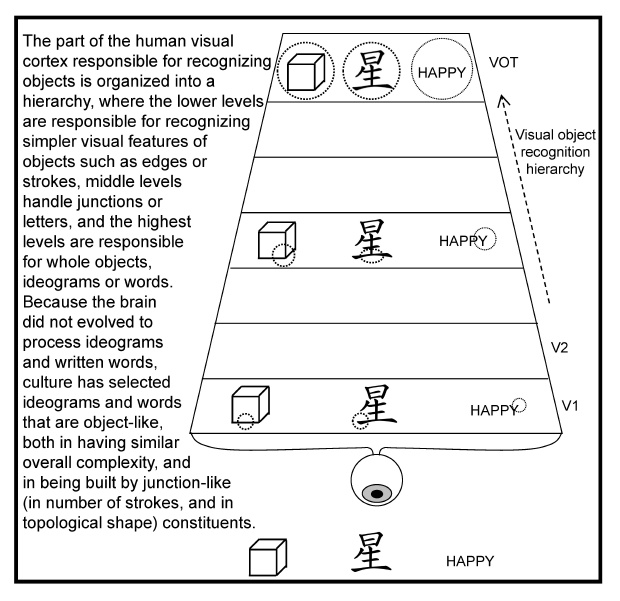 heirarchy of visual cortex for recognizing shapes topography Of Language figure 9