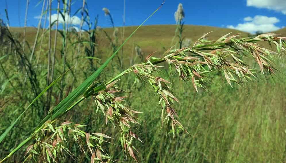 The Tree Planting Fad Threatens Ancient Grasslands