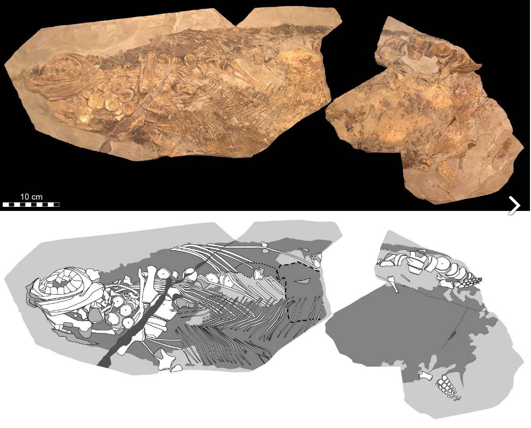 Jurassic Ichthyosaur Fossil So Well-preserved The Skin Is Still Soft