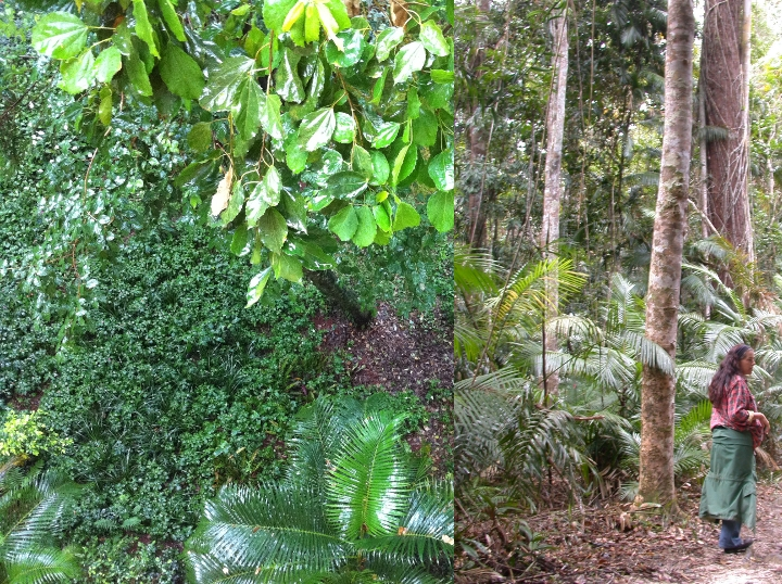 Atlantic vs rainforest Cairns