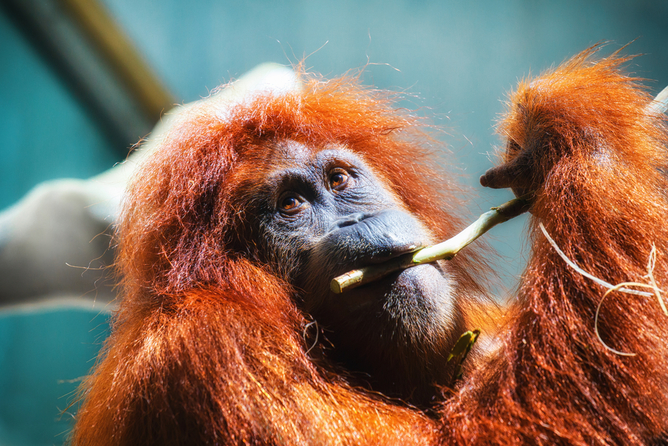 Animal Sex Is Spicier Than We Thought