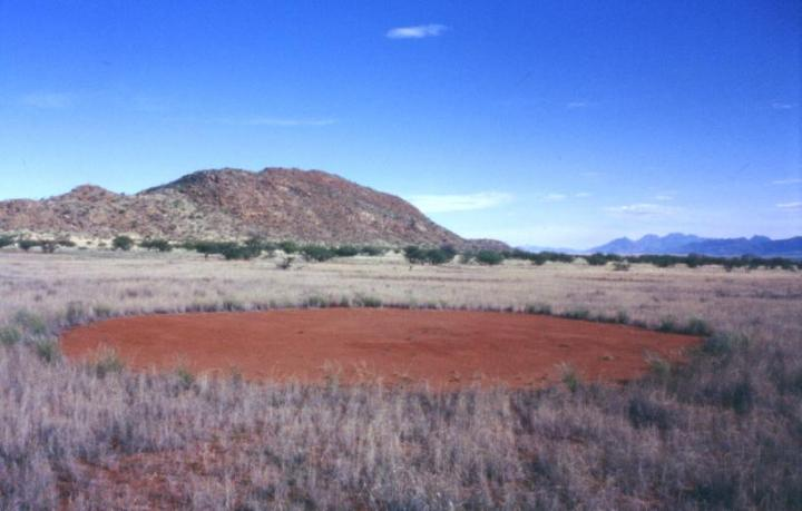 The Mystery Of Fairy Circles In The Namibian Desert - And Why They Look Like Skin Cells