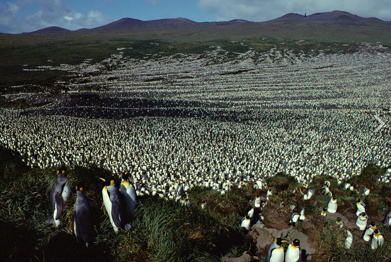 Large Antarctic Penguin Colony May Have Shrunk 88%