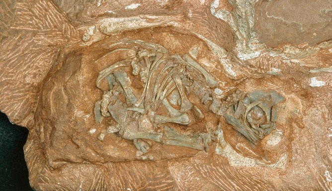 Dinosaur Eggs Ready To Hatch Secrets 200 Million Years Later