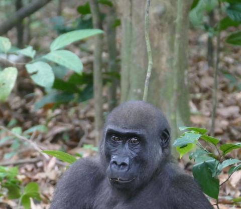 Anthropology Paper Shocked Primates Sometimes Do Things Regardless Of Evolutionary Optimization