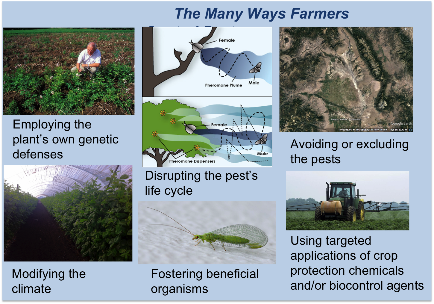 The Many Ways Farmers Control Pests