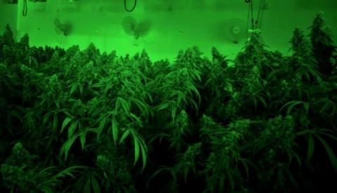 Volatile Organic Compounds From Marijuana Farms Will Cause Ozone Levels To Increase