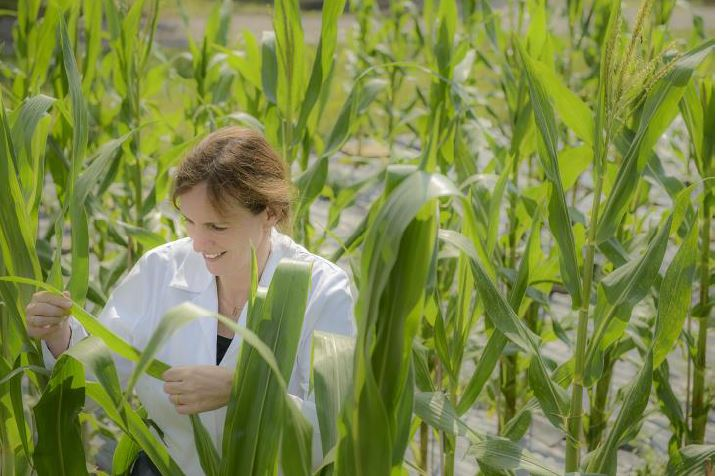 Just The Tip: How Maristem Biotech Could Lead To Higher Food Yields