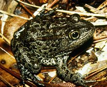 Mississippi Gopher Frog: Science 2.0 Beats Center For Biological Diversity In The Supreme Court 8-0