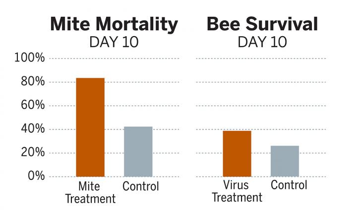 Genetically Engineered Bacteria To Combat The Cause Of Colony Collapse Disorder In Bees
