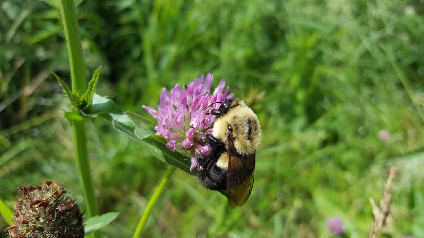 Parasites Are What Kill Bees, So More Beekeepers Won't Stop Colony Collapse Disorder - But This Mitigation Might
