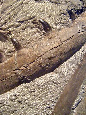 Late Cretaceous: Mosasaur Detail