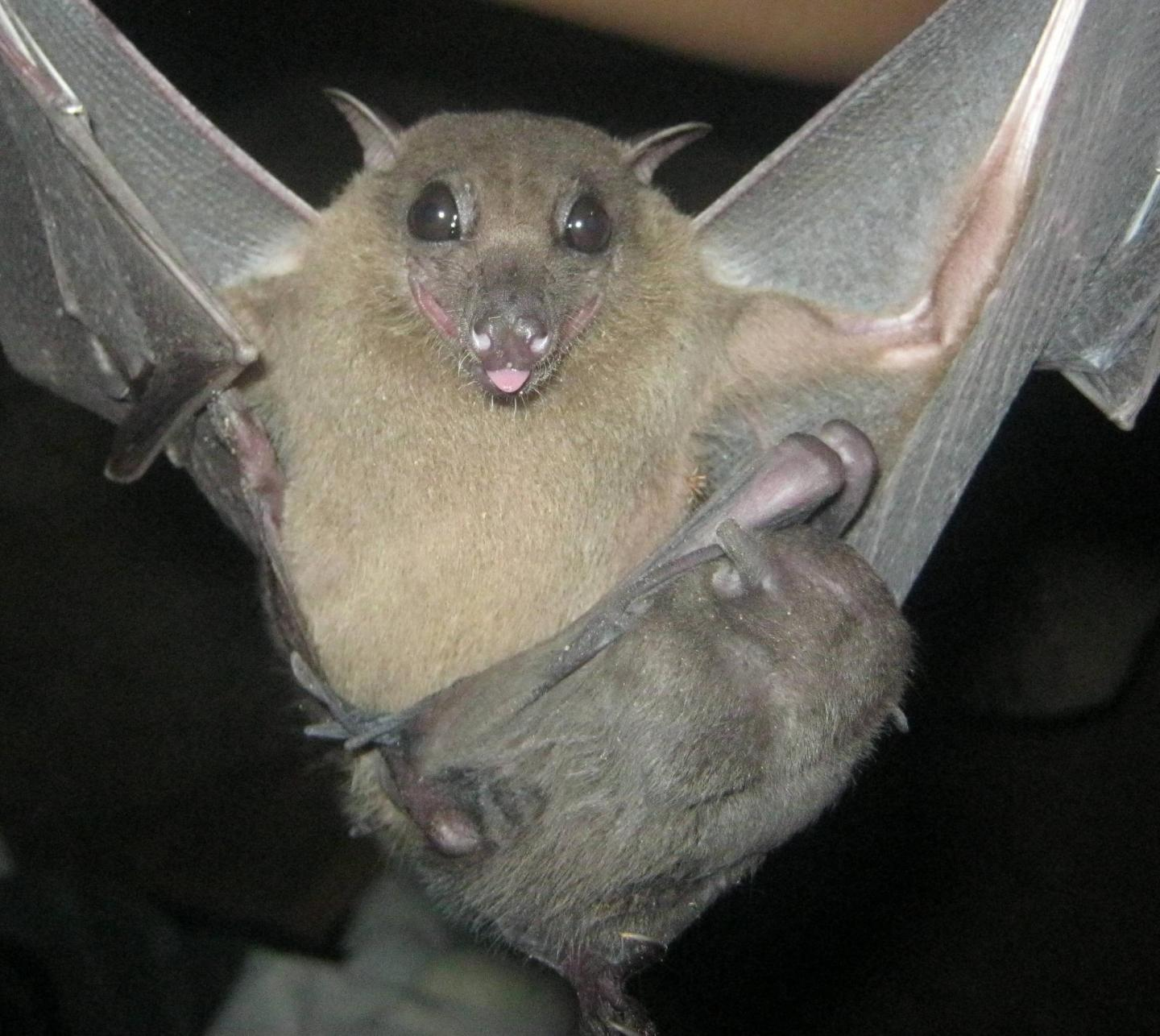 Coronavirus Is Not New, It's Been Evolving Along With Bats For Millions Of Years