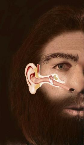 Chronic Ear Infections May Have Wiped Out Neanderthals