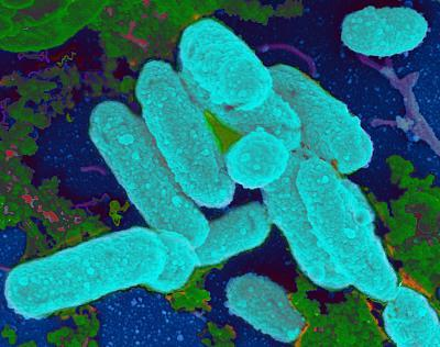 Low Doses Of Antibiotics Linked To Chronic Infections