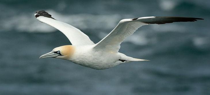 Why Don't Birds Break Their Necks When They Dive?