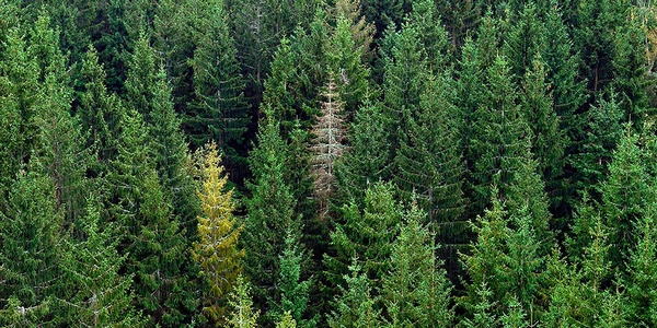 During Drought, Trees May Be Dying Before We Know It