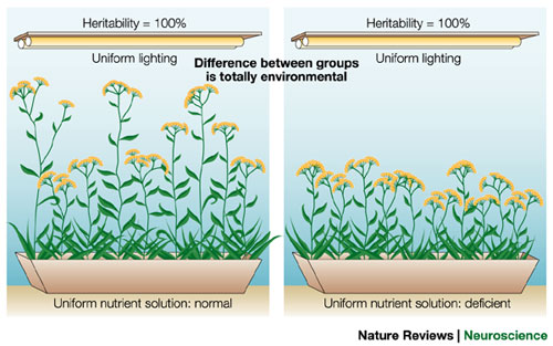 What Is Heritability?
