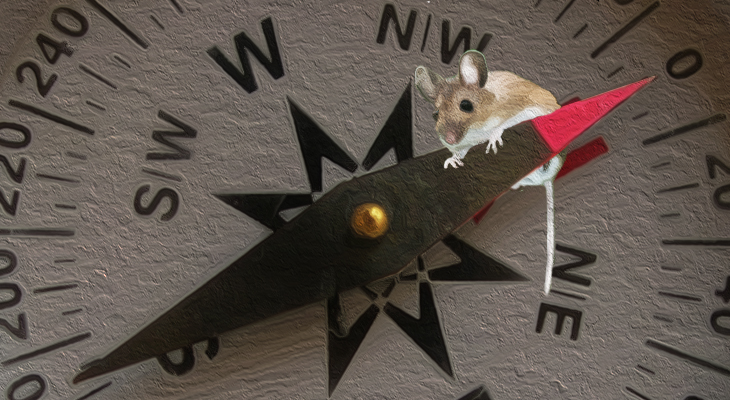 Of Mice And Magnets