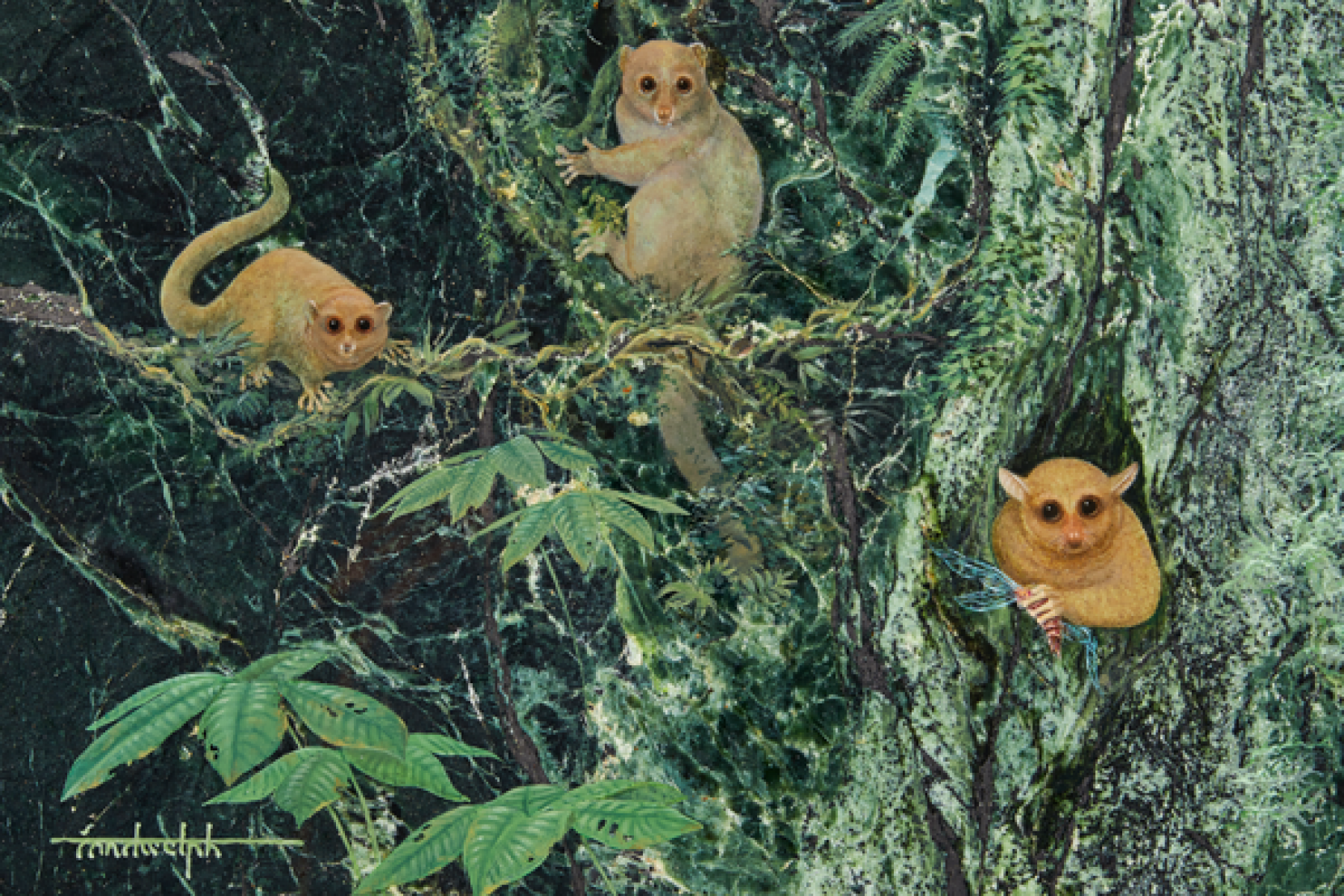 Three New Ancient Primates Identified From 46 Million Years Ago - In San Diego
