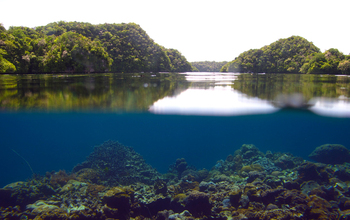 Riddle Of Resilience: Coral Reefs In Palau Thrive Under Acidification