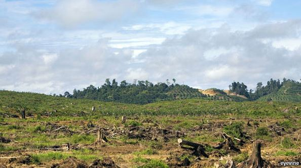 Palm Oil And Rainforests: Companies Are Abandoning Commitments, Says Group