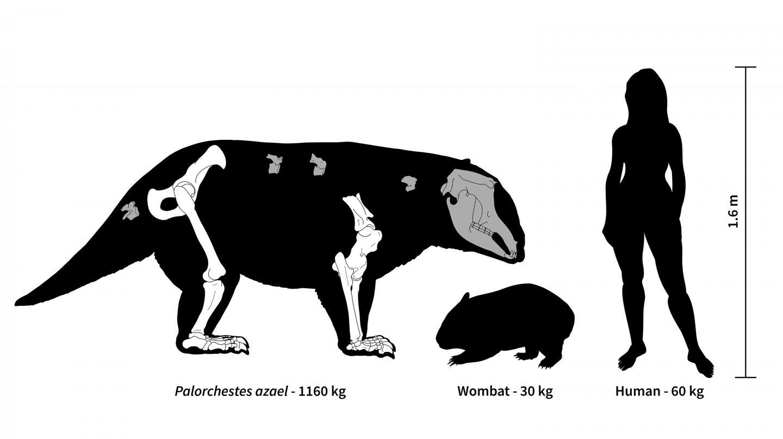 Palorchestes Azael: Wombat Ancestor Weighed 2,000 Lbs.