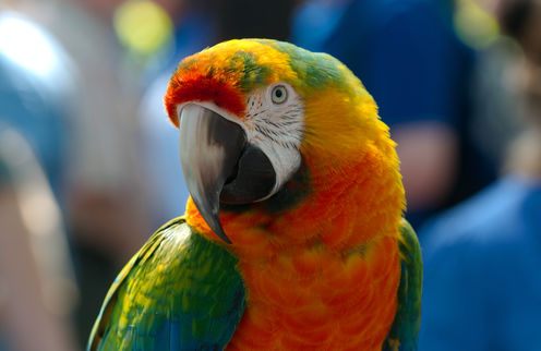 The Region In The Brain That Gives Parrots Their Chat