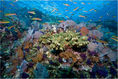 Promonitor Index: 5 Key Ways To Assess Reef Health