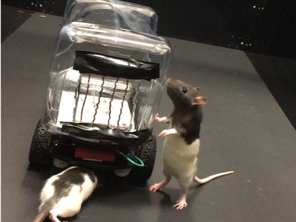 Rodent Operated Vehicles: A Whole New Kind Of Rat Race