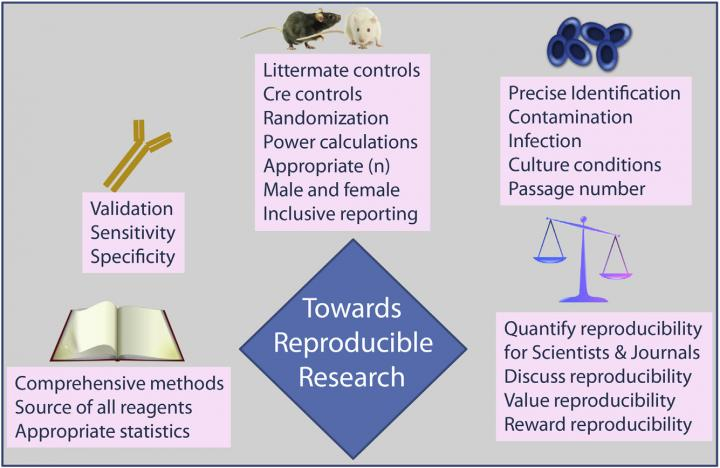 5 Ways To Improve Reproducibility In Biomedical Research