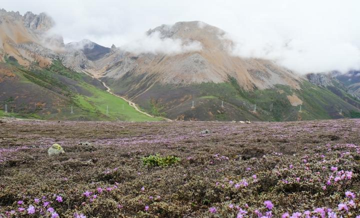 28 Million Years: Hengduan Mountains Flora Has Existed Longer Than Any Other Alpine Flora On Earth