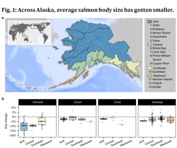 Alaska's Salmon Are Getting Smaller, And The Natural Fetish For 'Wild Caught' Is To Blame