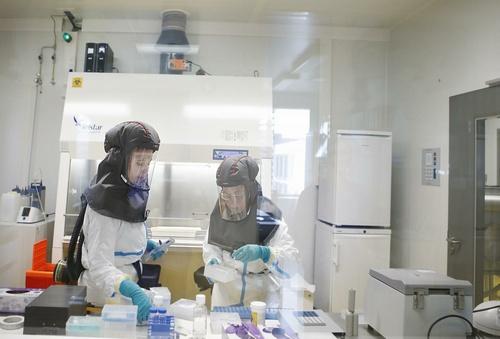 High Dose Of Favipiravir Counters SARS-CoV-2 In Hamsters
