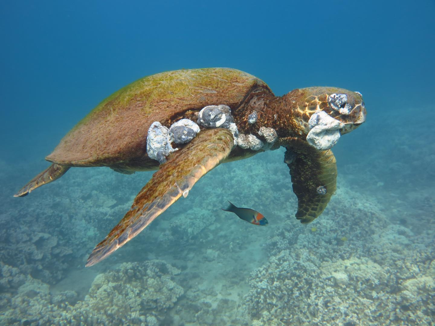 Pollution Linked To Sea Turtle Cancer
