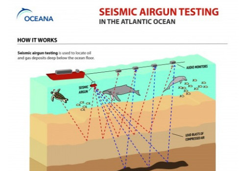 Obama Administration Criticized For Seismic Airgun Blasting In The Atlantic