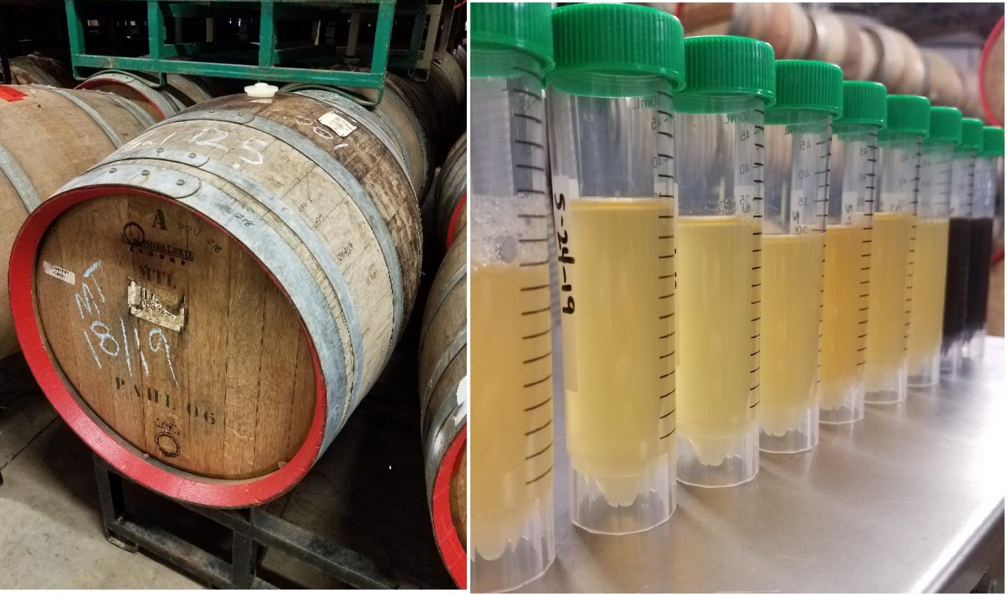 Sour Beer: The Science