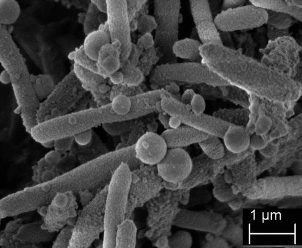 The Next Plague: Stenotrophomonas Maltophilia?