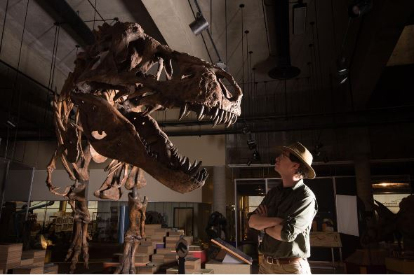 Newest Largest T. Rex Weighs In At 20,000 Pounds