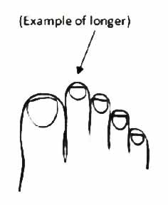 Toe Lengths - The Implications