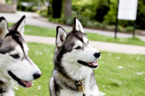 Your Dog Does Understand You - They Use Your Emotions To Predict Your Actions Much Like People Do